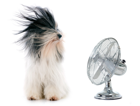 Using fan to lower electric bill during summer.